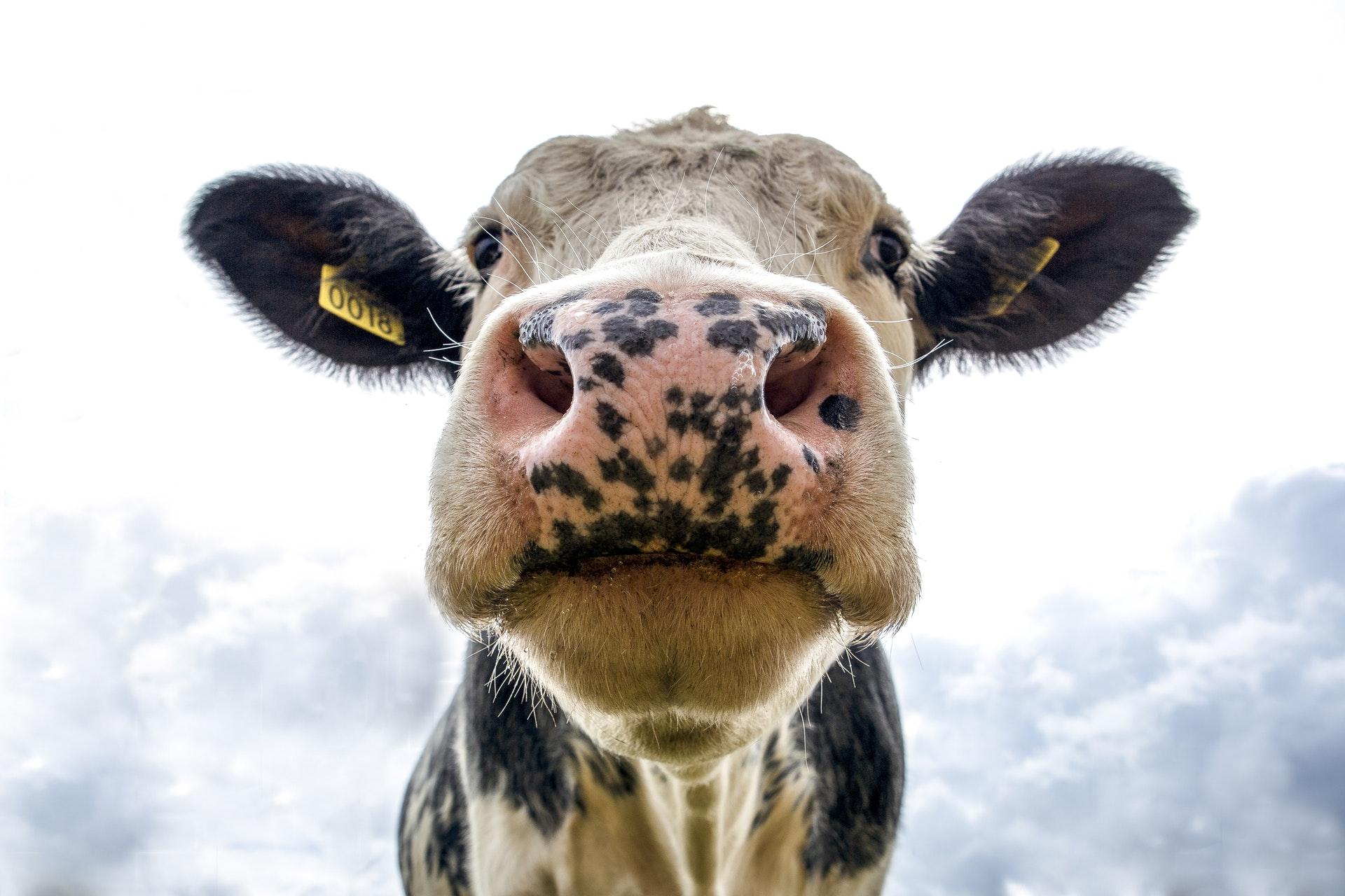 Ridurre il consumo di carne: tre buoni motivi